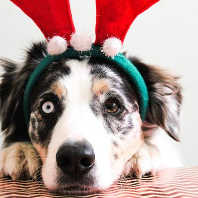 'Tis the season to be merry